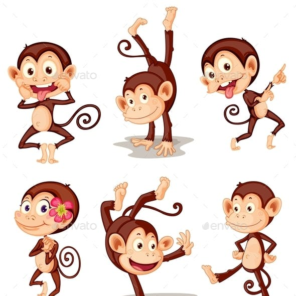 Monkey Series