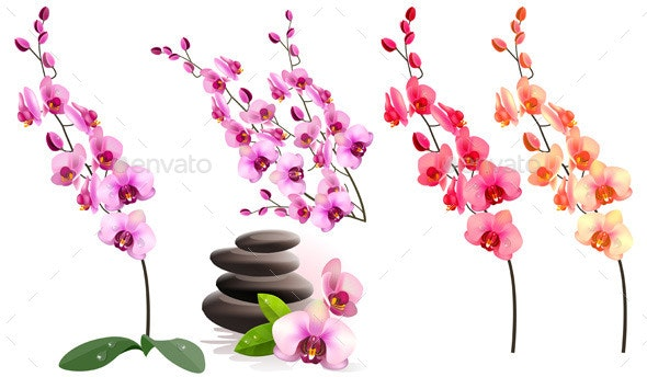 Orchid Flowers - Organic Objects Objects