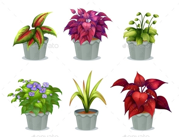 Six Different Plants By Interactimages Graphicriver