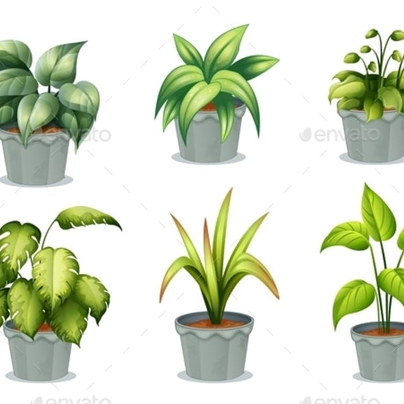 Six Leafy Plants with Pot