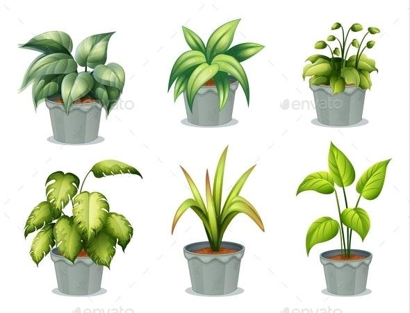 Six Leafy Plants with Pot - Flowers & Plants Nature