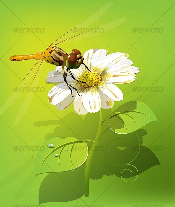 Dragonfly on flower - Flowers & Plants Nature