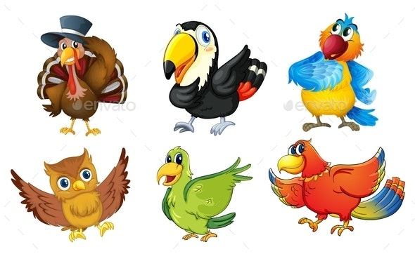 Group of Birds - Animals Characters