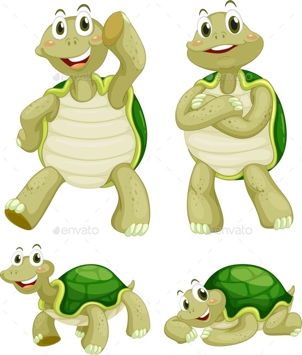 Turtles  - Animals Characters