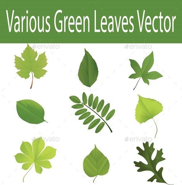 Various Green Leaves - Vectors