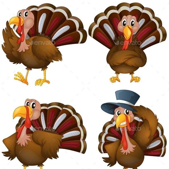 Turkey Set