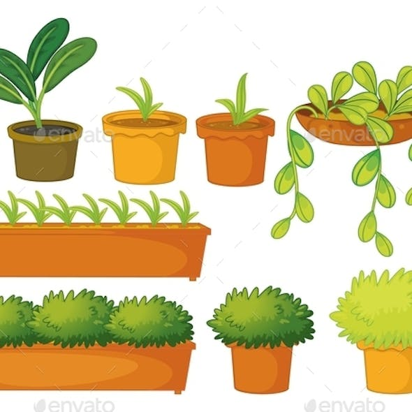 Various Plants and Pots