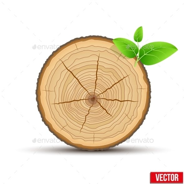 Wood Cross Section of Tree Trunk with Green Leaves