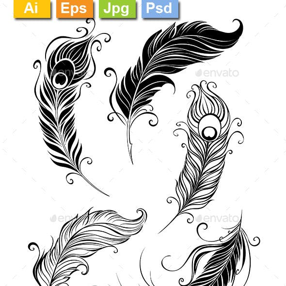 Peacock Feather Graphics Designs Templates From Graphicriver