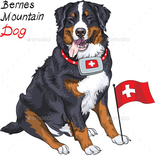 Bernese Mountain Dog with a First Aid Kit