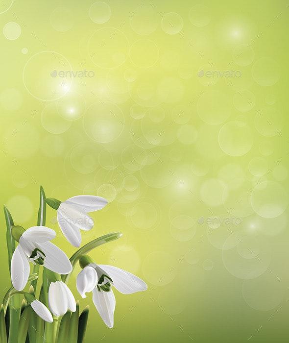 Spring Snowdrop Flowers on Green Background - Flourishes / Swirls Decorative