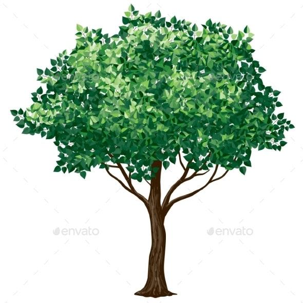Foliage Tree - Flowers & Plants Nature