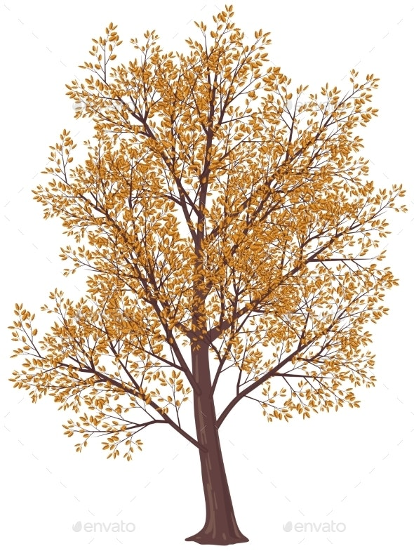 Autumn Tree - Flowers & Plants Nature