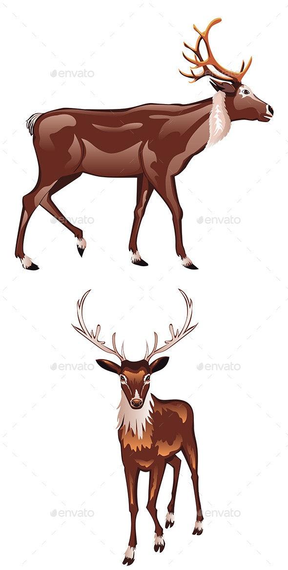 Brown Deer - Animals Characters
