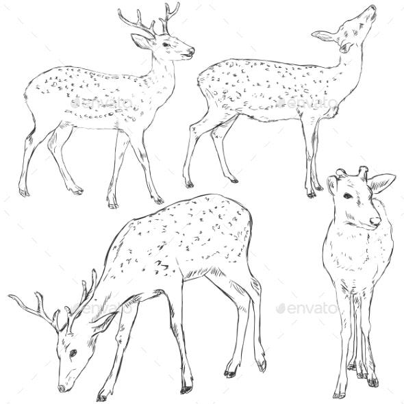 Vector Set of Sketch Dappled Deers - Tattoos Vectors