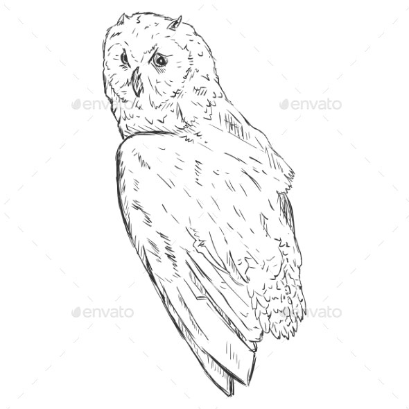 Vector Sketch Owl. Side View. - Tattoos Vectors