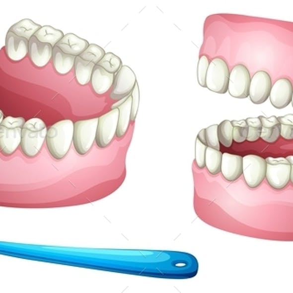 Dentures and Tooth Brush