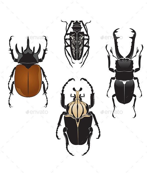 Beetles - Animals Characters