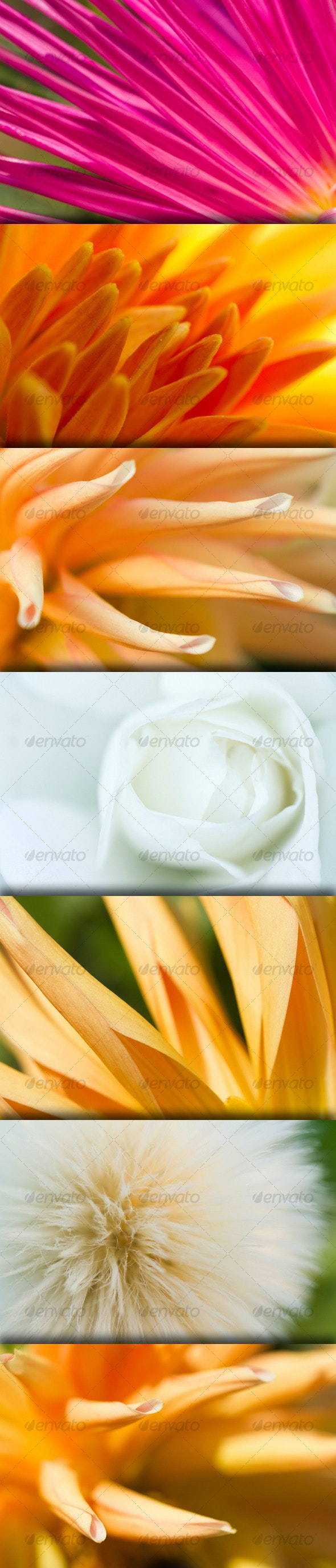 Abstract Flower Vivid Background - Nature Backgrounds