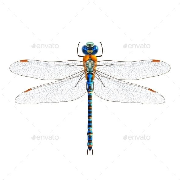 Dragonfly  - Seasons Nature