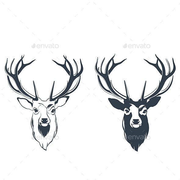 Male Red Deer Head
