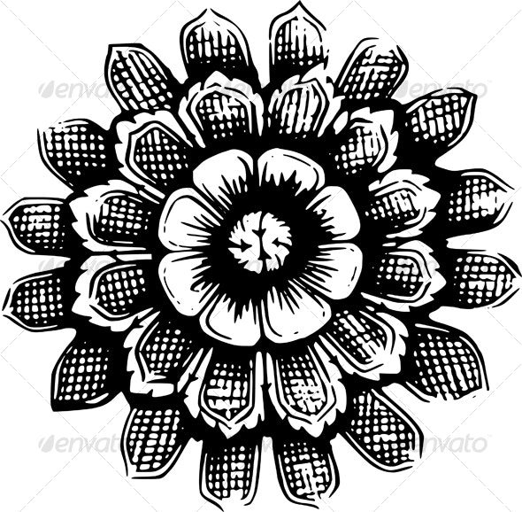Flower - Flowers & Plants Nature