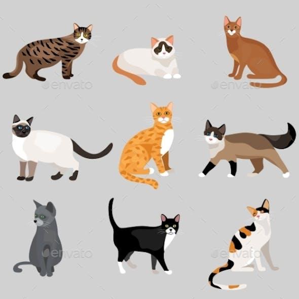 Set of Cartoon Kitties or Cats
