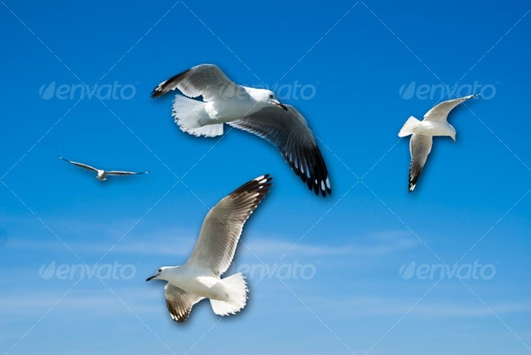 Bird Collection - Nature & Animals Isolated Objects