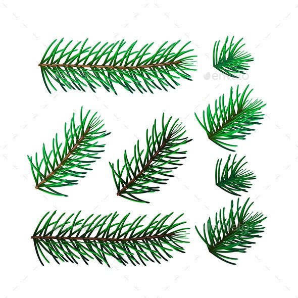 Set of Eight Spruce Twigs - Flowers & Plants Nature