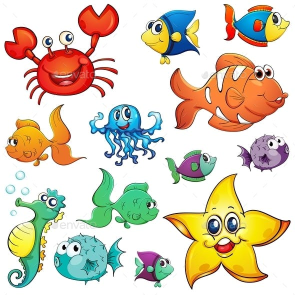 Different Sea Creatures