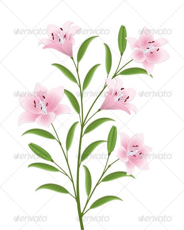 Isolated image of a flowers - Flowers & Plants Nature