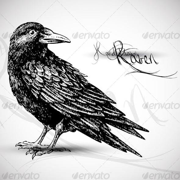Raven drawing - vector