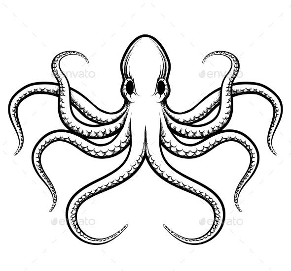 Octopus Illustration - Animals Characters