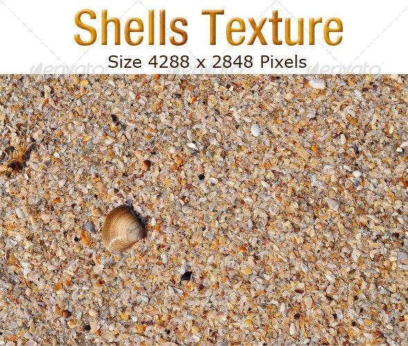 Shells Texture - Nature Textures