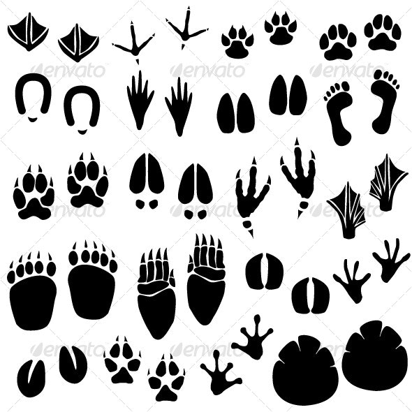 Animal Footprint Track Vector - Animals Characters