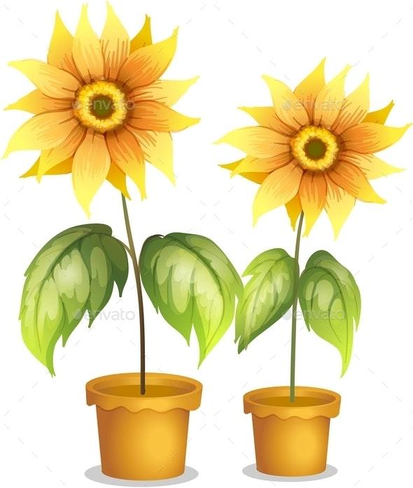 Flower Plant in a Pot - Flowers & Plants Nature