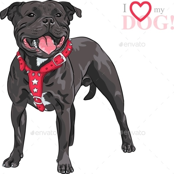 Staffordshire Bull Terrier Breed - Animals Characters