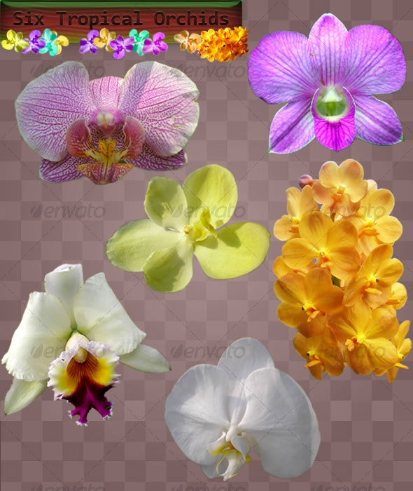 Orchid Flower Set - Nature & Animals Isolated Objects
