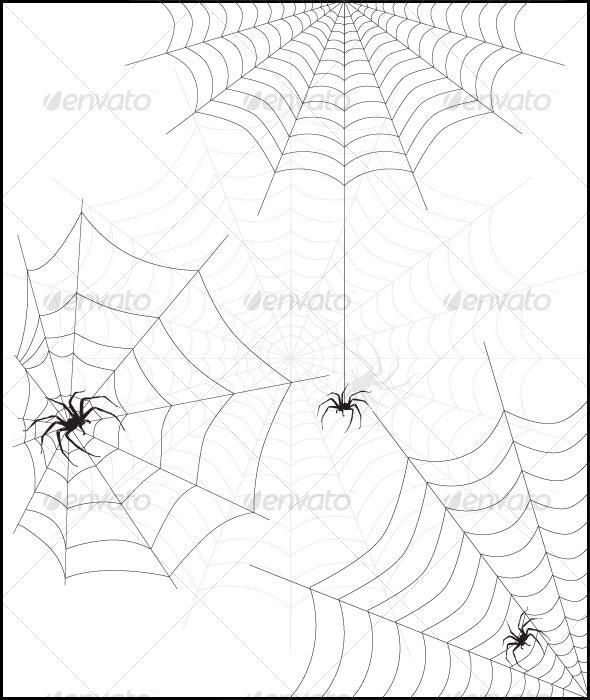 Spider web & spider - Halloween Seasons/Holidays