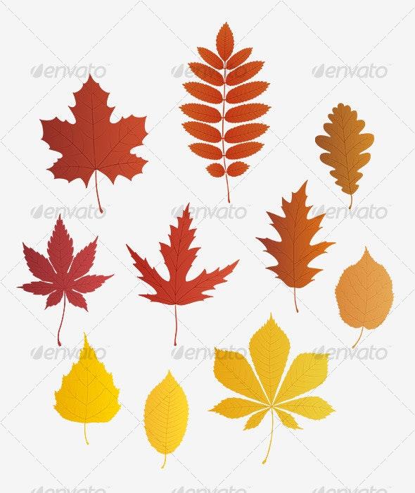 Autumn leaves - vector - Flowers & Plants Nature