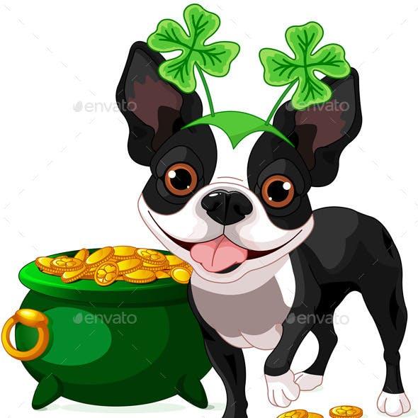 Boston Terrier Celebrates Saint Patricks Day