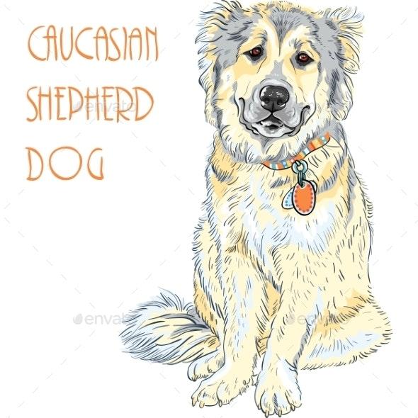 Caucasian Shepherd Dog Breed  - Animals Characters