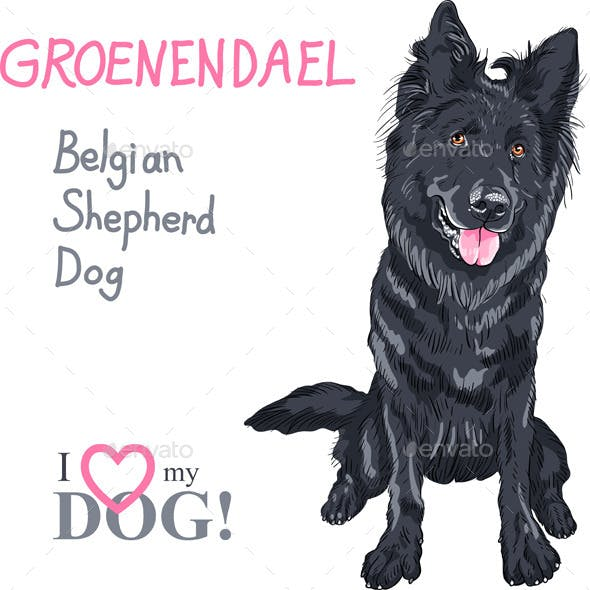 Dog Belgian Shepherd Dog