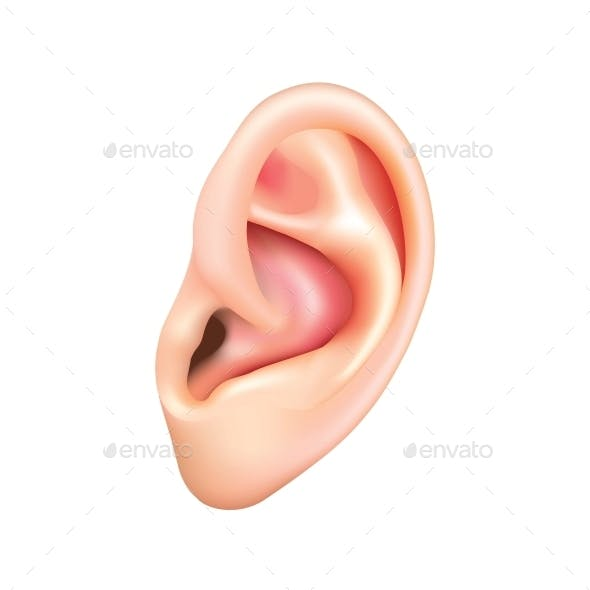 Human Ear Isolated