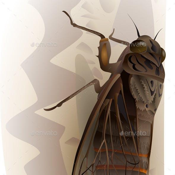 Cicada Fly on the Bark of Tree