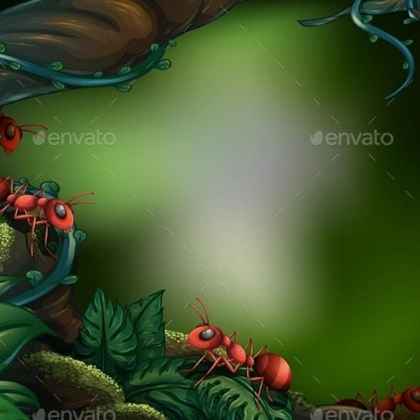 Ants in Forest
