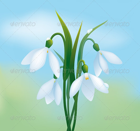 Snowdrops - Flowers & Plants Nature