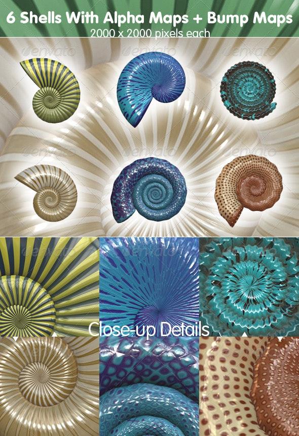 6 Sea Shells - Miscellaneous Illustrations