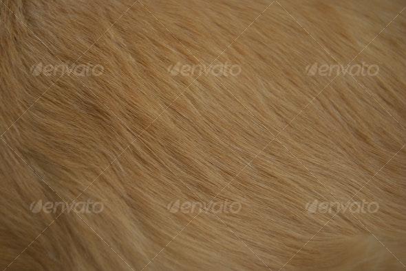 dog fur - Nature Textures