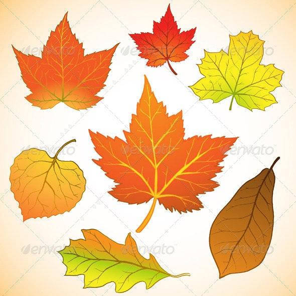 Fall Leaves - Seasons Nature